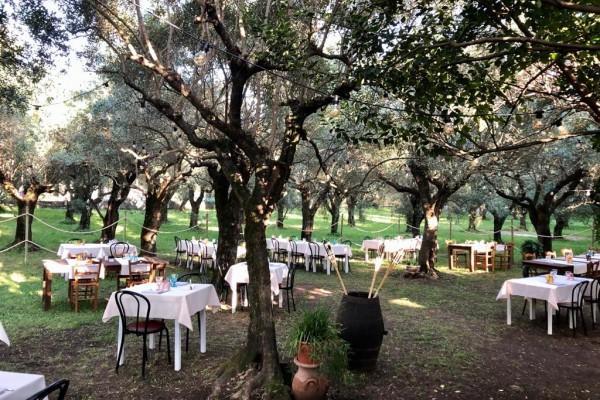 Cena in oliveto secolare